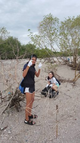 Mangrove Cleaning